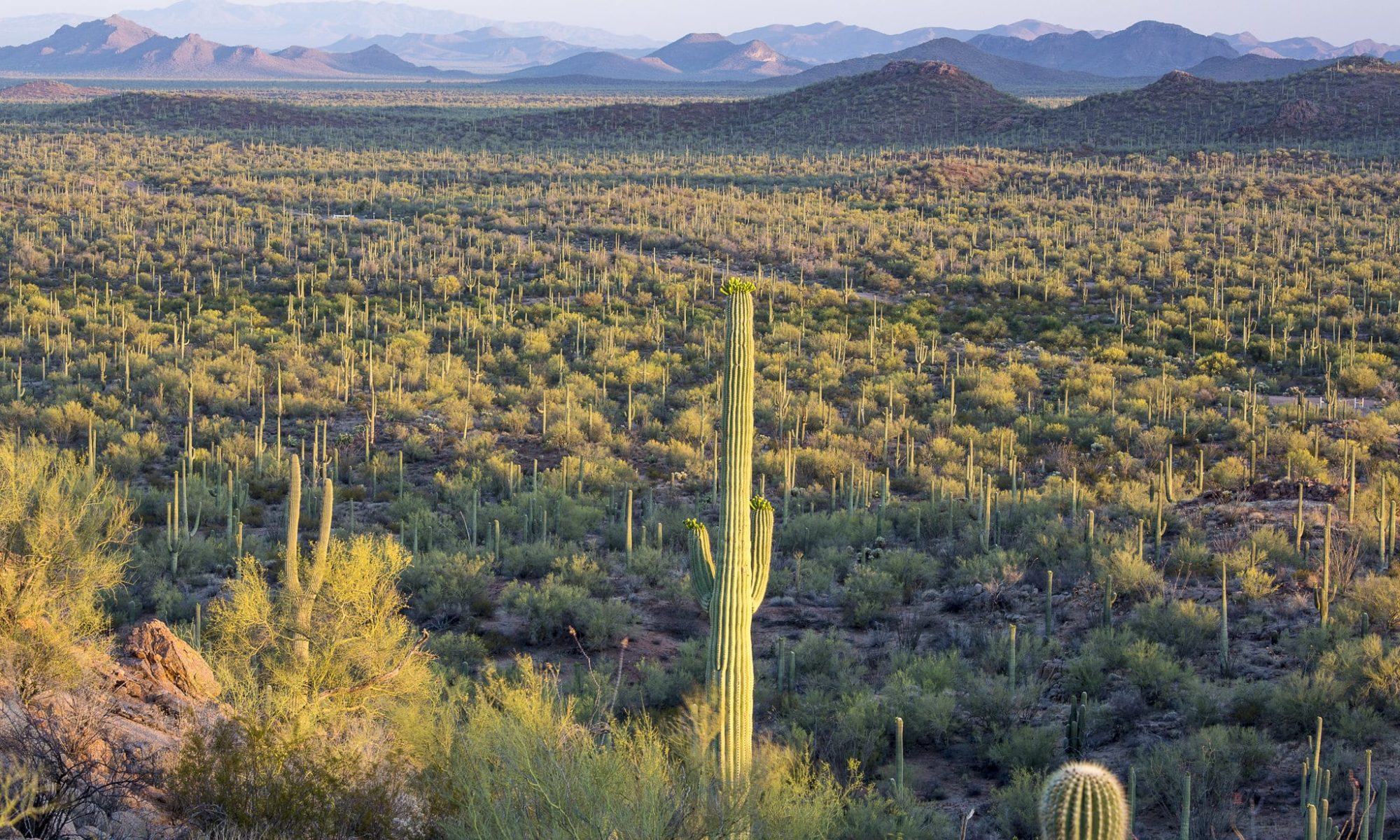 Arizona Conservation Partners
